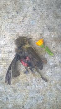 Bird with marigold
