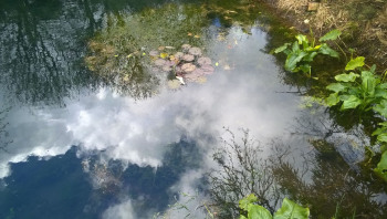 reflections in pond