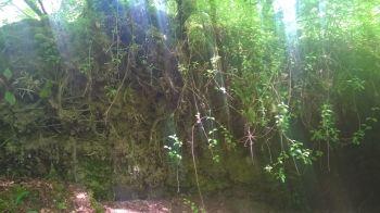 Sun Skirts Roots