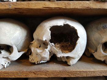 Skull with nest